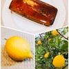 『学校で自生しているレモンで「レモンケーキ ウィークエンドシトロン」調理実習デモ』