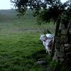 雨宿りの羊たち