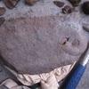 アンモナイトの名前を調べてみた。自宅でできる遊び 初心者が化石の同定に挑戦