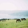 【ロードカナロア】種牡馬の特徴 晩成気味で時計が掛かる馬場が得意(2020,6,5更新)