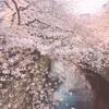 【東京】絶景お花見イタリアン❤︎