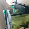 水槽の魚たち