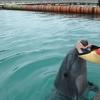 石垣島でイルカと泳いでカフェでランチと川平湾でジュース(沖縄の八重山諸島の石垣島)
