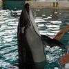 のとじま水族館の食事する&触れ合える海獣たちが可愛すぎる
