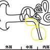 中耳炎になる子とならない子。免疫力を上げる骨格矯正。