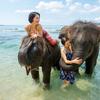 南国ビーチで象さんと海水浴