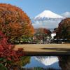 Momijigari, Autumn Leaves Viewing (2017)