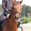 珍しい療養馬