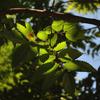 デジタル一眼レフカメラ「NIKON D3000」で2016年8月10日までに撮影した写真です。キツネノカミソリやアキノタムラソウなど