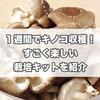 1週間でキノコ栽培!簡単キットで楽しく椎茸を育てよう☆