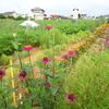 神原町花の会(花美原会)( 271 )    花いっぱい区域と健康広場花ラインの整備