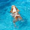 中級平泳ぎと初級クロール