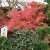 円覚寺の紅葉 その1