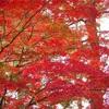 【紅葉】の奈良公園にシカを見に行って来た!