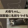 犬母ちゃん、保護猫に名前をつける
