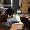 甲斐犬とご客人〜(´⊙ω⊙`)ドウナル⁉︎