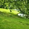 天然芝と人工芝のメリット・デメリットから僕の答え
