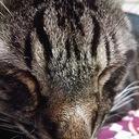 飼い猫だって夜行性 ~トラジと気ままな福猫達~