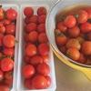 家庭菜園のトマトで自家製トマトソース