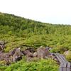 丸山の森と本番間もない白駒池