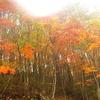 入笠山紅葉登山!富士パノラマリゾート~入笠湿原~大阿原湿原