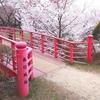 信州伊那市の桜風景②