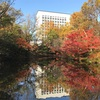 池に映る紅葉🍁🍁工法庵(くほうあん)と洞雲亭(どううんてい)の紅葉が見頃です。🍁🍁
