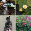 梅雨の花、梅雨の景色【朝の生駒あたり】