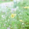 【全国都市緑化よこはまフェア】里山ガーデン秋の大花壇公開【行ってきた】【2017年】