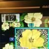 (実戦)Wild Rosesを2万弱Gブン回してきた話