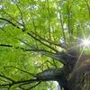 【持続可能な森林】都市にも「第2の森林」を ~林野庁が「森林・林業基本計画」を公表