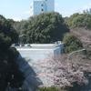 《徒然記》横浜国立大学に合格された皆さんおめでとうございます!