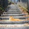 なぜ猫は背後に回るのか…
