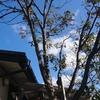 コナラの木が枯れてしまいました(-_-;)