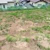 【庭】雑草との闘いとワラビのお浸し