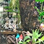 「チェンマイ タイ ハウス(Chiang Mai Thai House) 」~チェンマイ「ターペー門」の近くの格安ブティックホテル!!