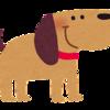 NEWS手越の愛犬の名前はEMMA!?楽曲にちなんでいた?