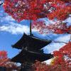 京都紅葉散歩🍁洛東編 -真如堂の紅葉など-