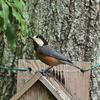 西湖野鳥の森公園で野鳥撮影に挑戦