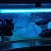 東芝殺菌ランプで紫外線殺菌ボックスを自作しました
