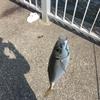 2021年度版ふれーゆ裏で釣れるサカナ(備忘録20210406)