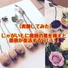 【実験】薔薇の茎をじゃがいもに挿すと薔薇が復活するってよ!