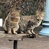 野良猫さん達の写真撮ってみました。
