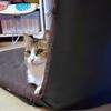 齋藤未来さんの「柵の横のネコ」を紹介するにゃ 【ノラ猫は大変だにゃ…】