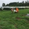 果菜の収穫と管理に追われる日々…さらに秋野菜も(農大78,81,88日目:栽培実習)