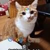 Googleフォト代替案1「Google One」を無料で使う方法