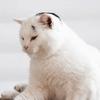 ペットカメラ付き!ペットに自動で餌をあげてくれる自動給餌器カリカリマシーン SP の本当の口コミとは?