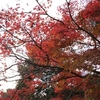 今が紅葉真っ盛り、今がちょうど見頃。12月上旬でもいけそうだ!!