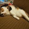 【愛猫日記】毎日アンヌさん#278