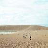 鳥取砂丘に行って来た。